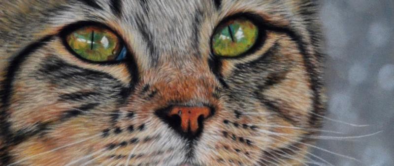 Katzen malen mit Softpastell auf Velourpapier